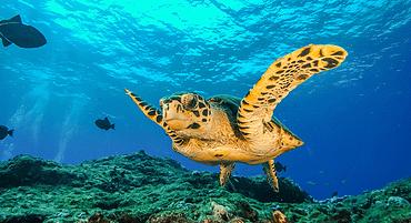 7 lugares para trabalhar com mergulho no Brasil